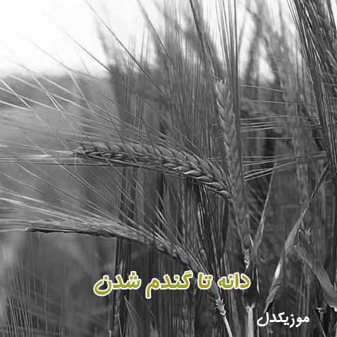 دانلود آهنگ از دانه تا گندم شدن امیر زمستانی