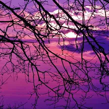 آهنگ من آن برگ درخت زارو زردم با صدای بچه