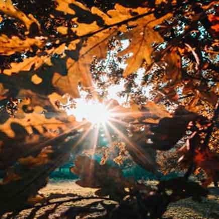 فایل صوتی دو قدم مانده که پاییز به یغما برود