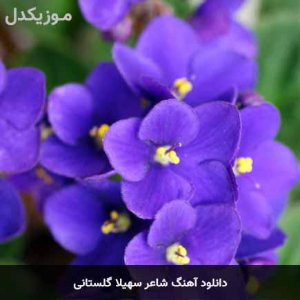 دانلود اهنگ شاعر سهیلا گلستانی